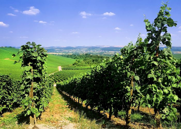 Moselle Valley vineyards, Luxembourg