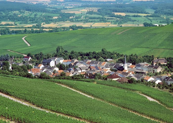 Vineyards of Moselle Valley, Luxembourg