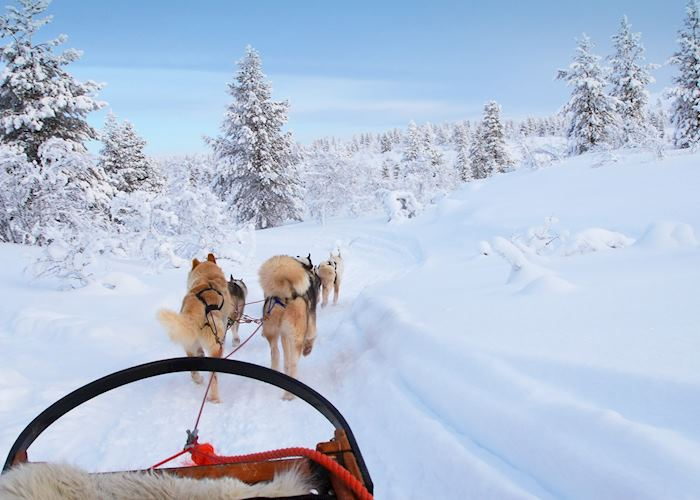 Riding a husky sled