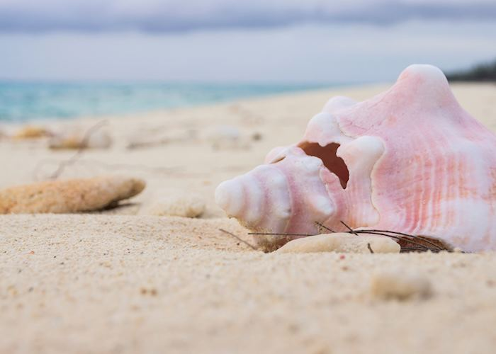 Conch shell on sand