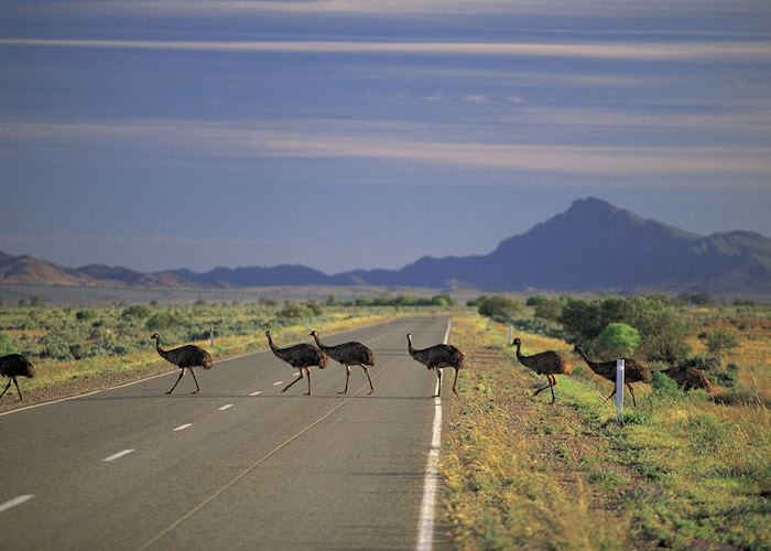 Emus Crossing, Flinders Ranges, SA