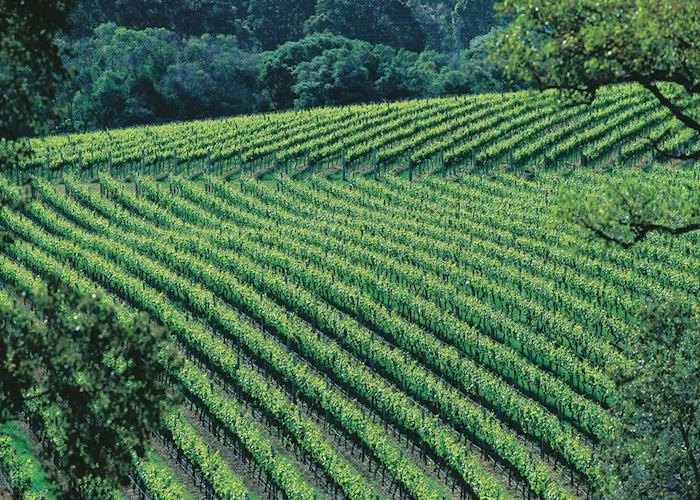 Vineyards, The Margaret River region