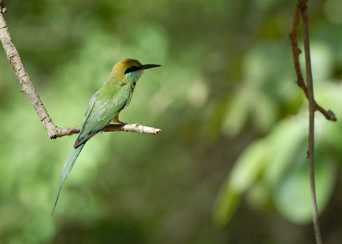 Bee-eater in the Yala National Park