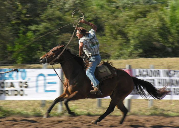 Cowboy from the Pantanal