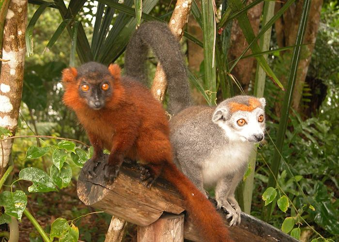 Lemurs at Le Palmarium