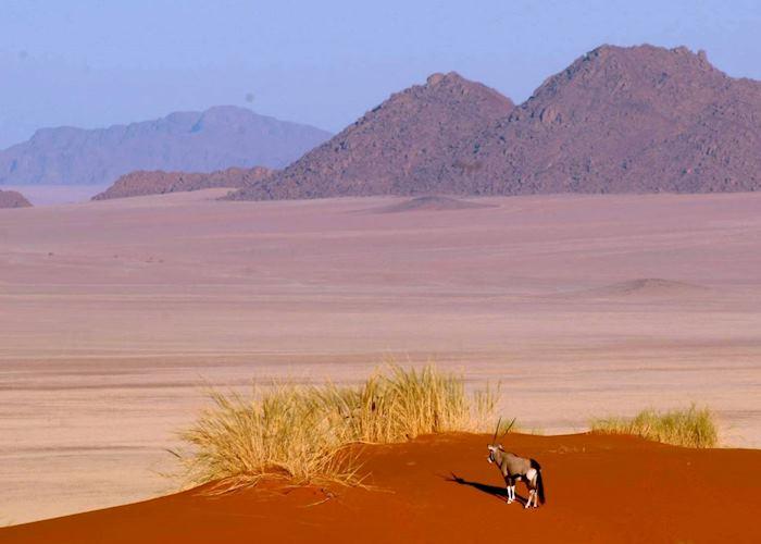 Lone Oryx, Namibia