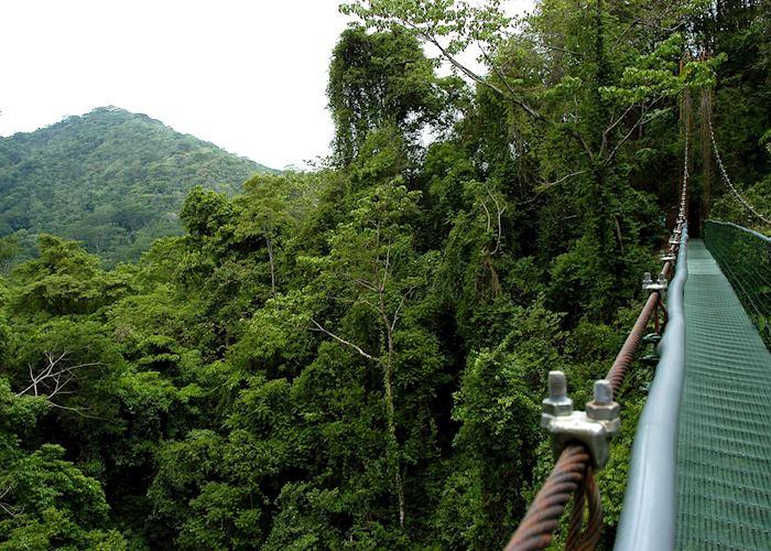 Canopy walk Sarapiqui, Costa Rica
