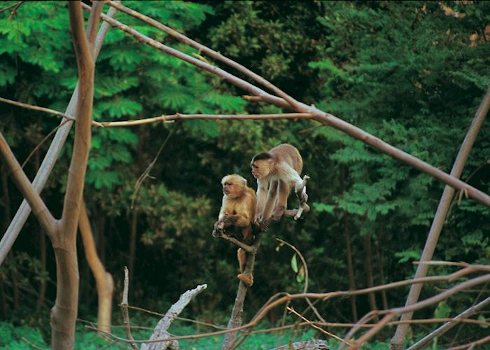 Monkeys, Amazon
