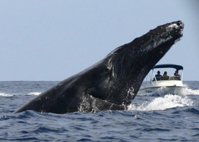 Whale watching, Ile Sainte Marie, Madagascar