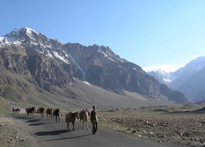 Sarchu, trekking ponies, Manali to Leh Road