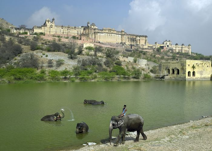 Elephants at Amber Fort and Palace, Jaipur