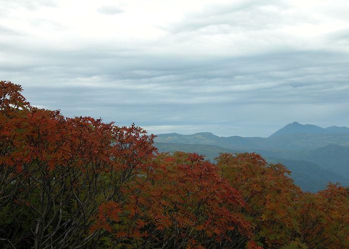 Red leaves in Asahidake