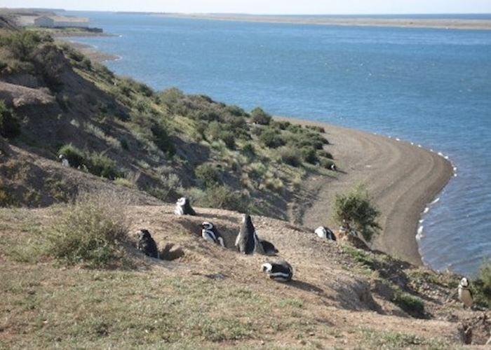 Penguins at Peninsula Valdes