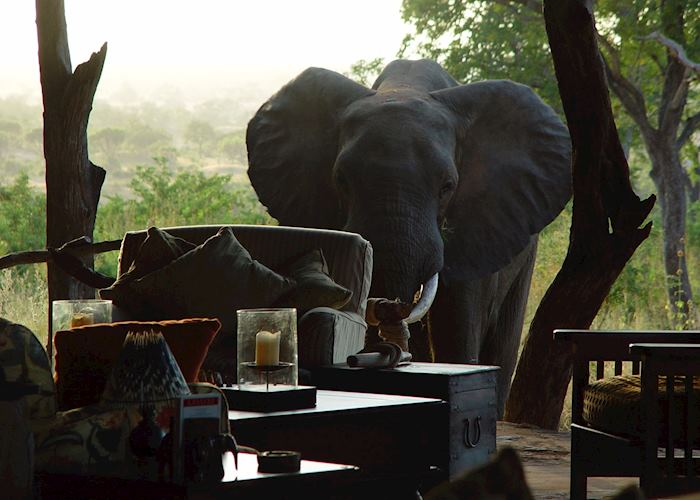 Elephant at Beho Beho Camp