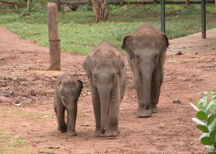 Uda Walawe Elephant Transit Centre