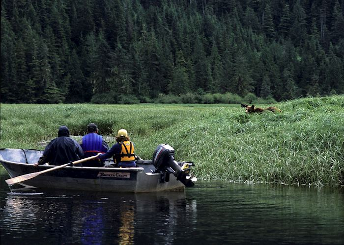 Quietly stalking grizzly bears at Great Bear Lodge