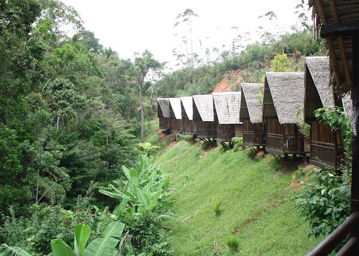 Feon'ny Ala, Andasibe-Mantadia National Park