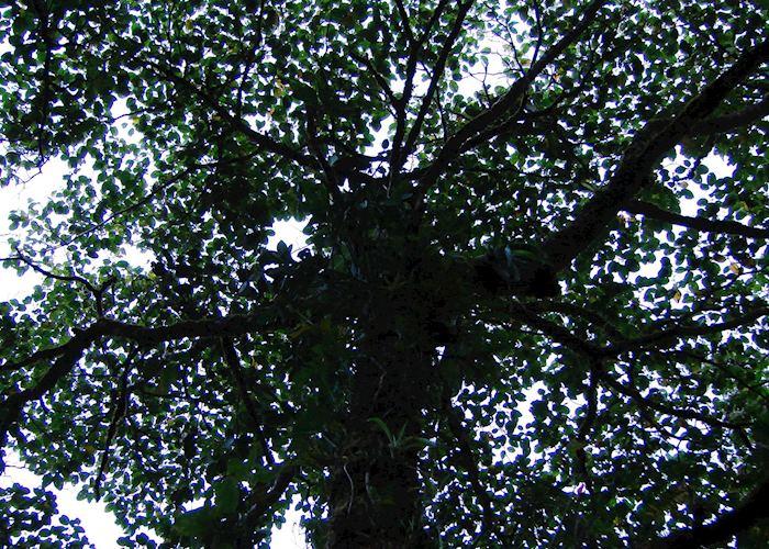 Cloudforest, El Silencio