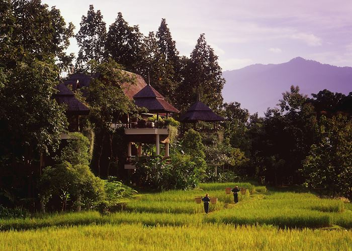 The Four Seasons, Chiang Mai