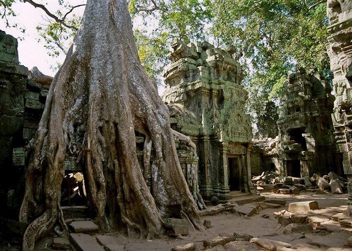 Twisted limbs amongst Ta Prohm, Siem Reap