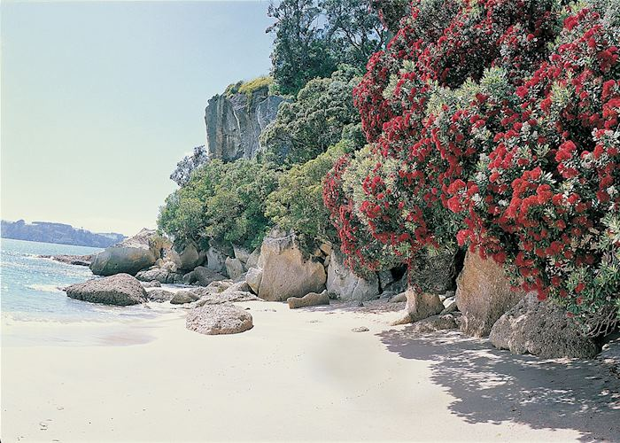Lonely Bay, Coromandel Peninsula