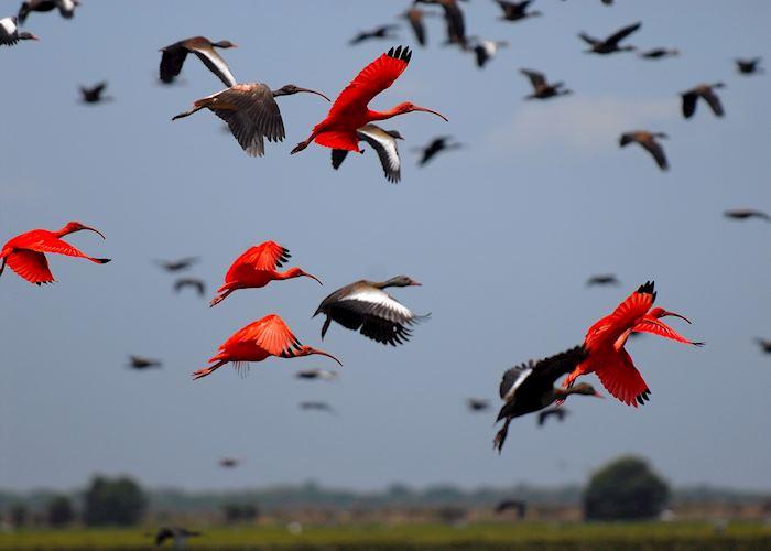 Birdlife, Los Llanos