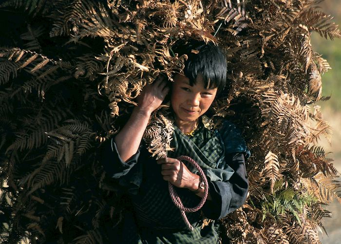 Child carrying bracken, Bumthang valley