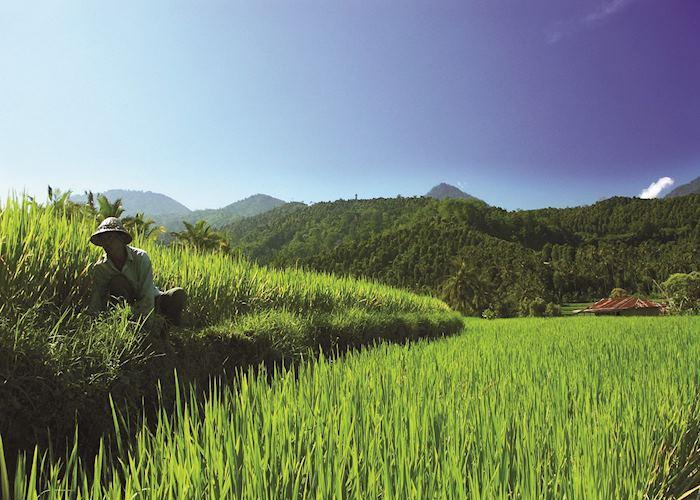 Paddy fields in Bali, Indonesia