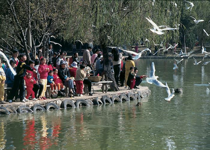 Feeding the birds, Kunming