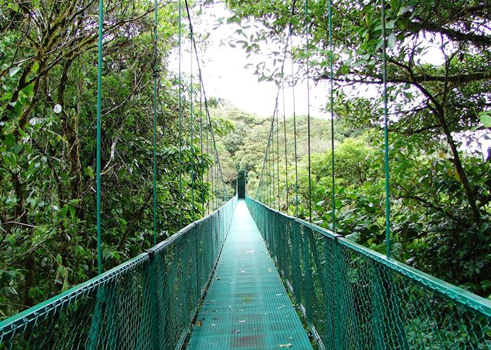 Cloud-forest, Monteverde