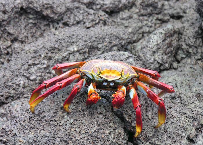 Sally Lightfoot, Galapagos Islands, Ecuador