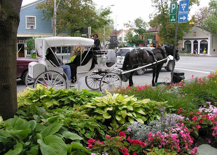 Horse-drawn carriage rides in Niagara on the Lake