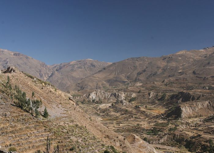Pre-Inca terracing in the Colca Canyon