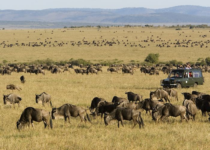 Migration from Rekero Tented Camp, Masai Mara