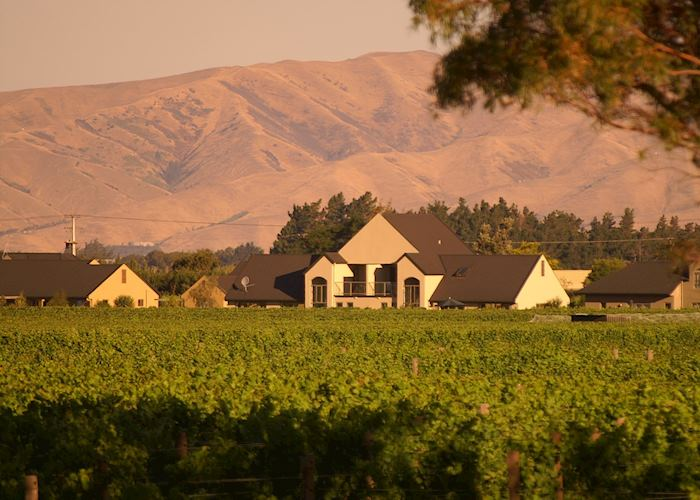 Villas across the vines, Vintner's Retreat Villas, Blenheim & The Winelands