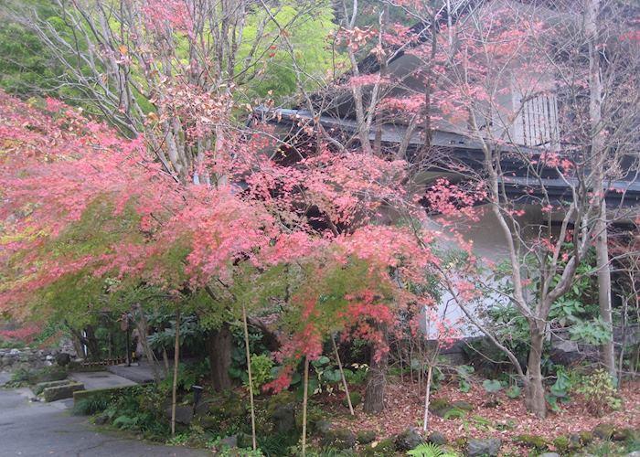 Autumn colours, Kurokawa, Japan
