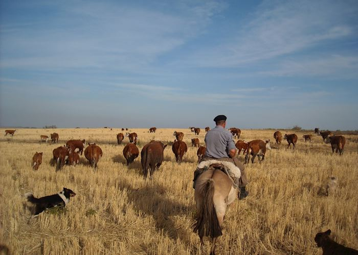 Gaucho in Uruguay