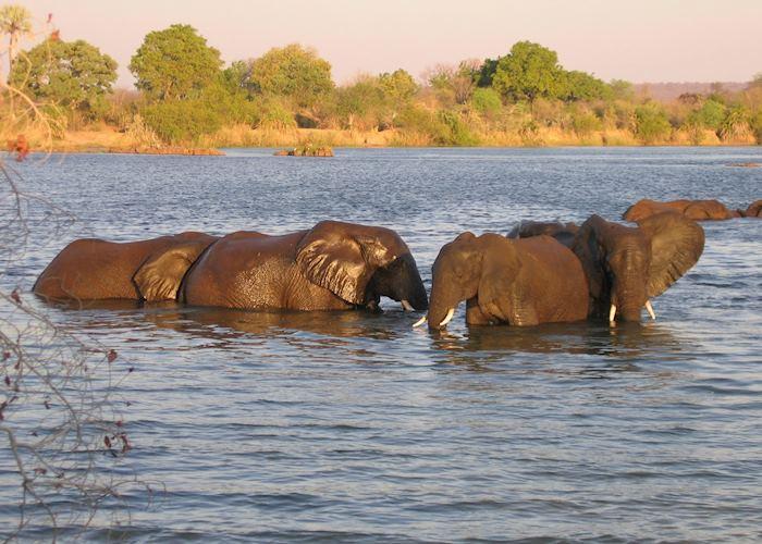 Elephant in the Zambezi River