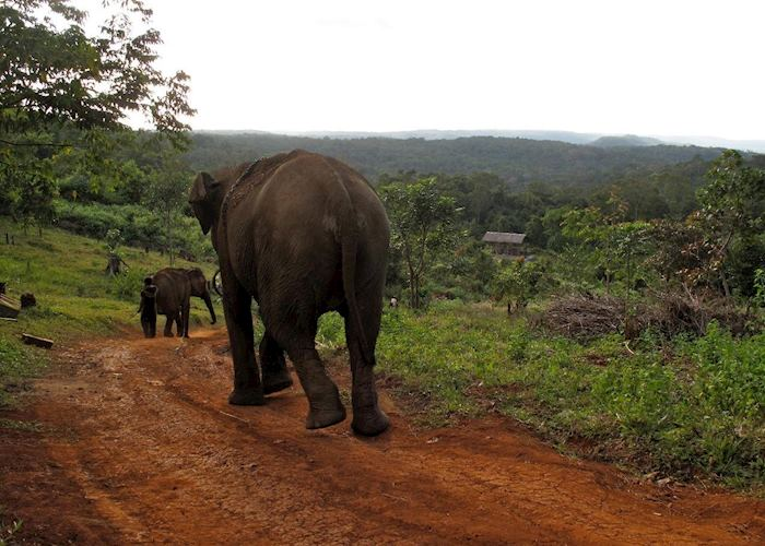 Elephants at the ELIE project, Mondulkiri