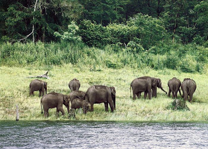 Elephants at Nagarhole National Park