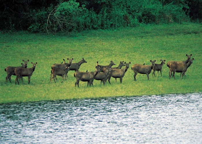 Deer at Nagarhole National Park