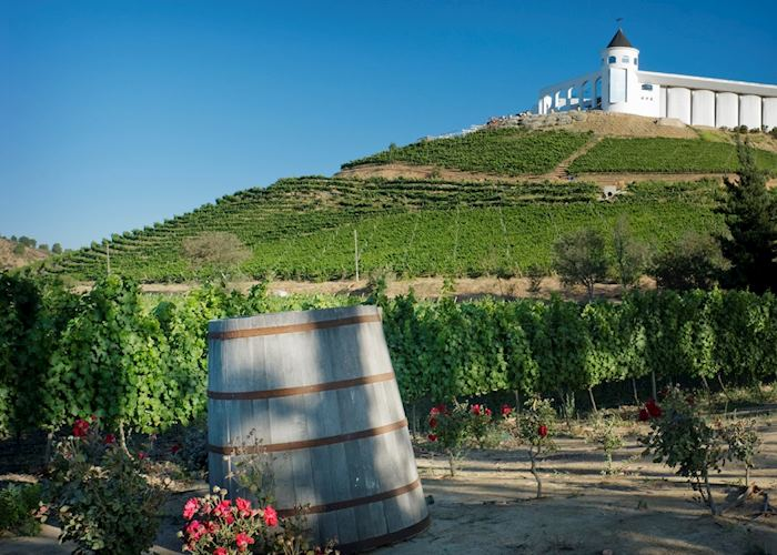 Typical winery and vineyard, Colchagua Valley, Chile