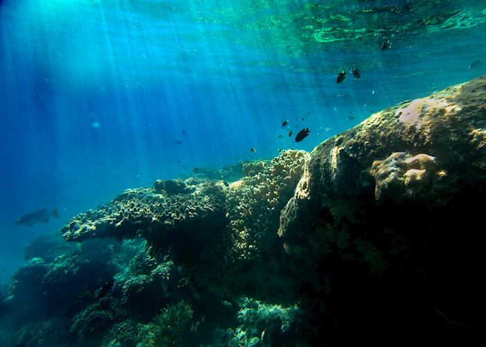 Underwater in Pemuteran Bay, Indonesia