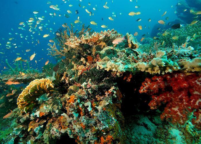 Underwater life on Moyo island, Indonesia