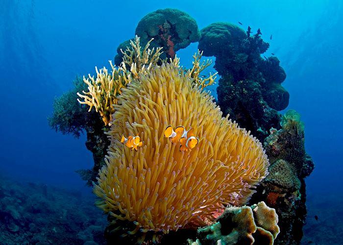 Underwater scene near Pulau Menyawakan, Indonesia