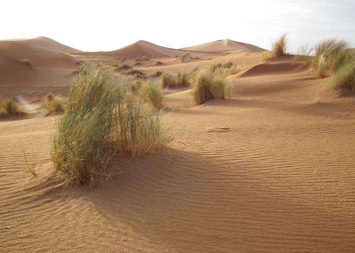 The Erg Chebbi, Morocco