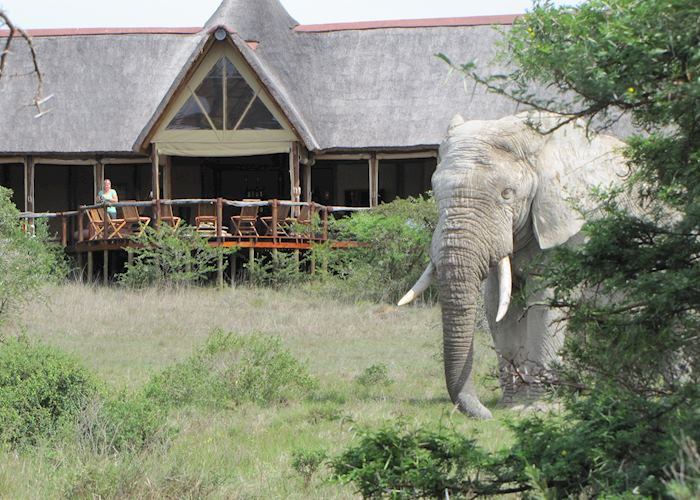 Amakhala Bush Lodge, Eastern Cape Game Areas