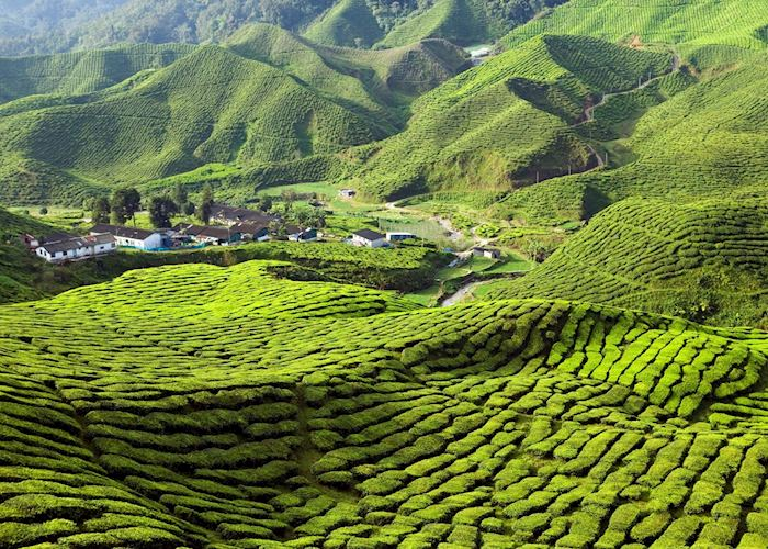 Explore the Cameron Highlands, Malaysia | Audley Travel