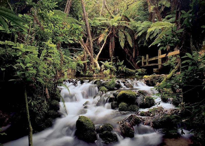 Rainbow Springs, Rotorua