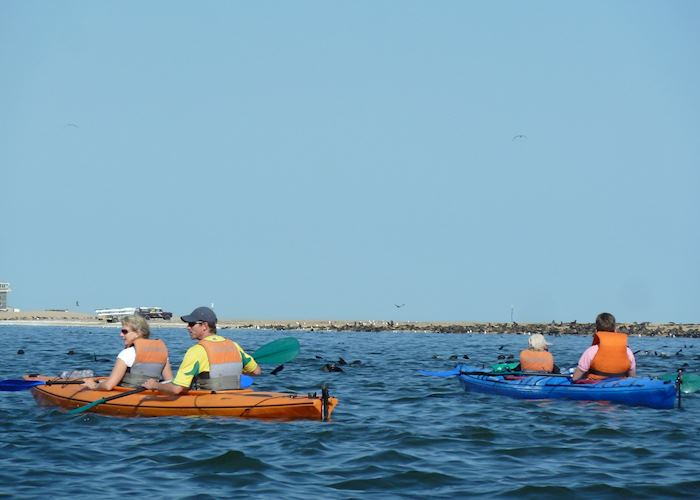 Kayaking With Seals, Pelican Point